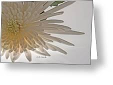 Flower-white Greeting Card