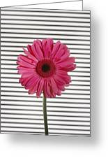 Flower With Lines Greeting Card
