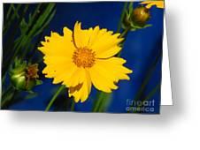 Flower Yellow Greeting Card