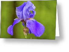 Flower1 Greeting Card
