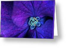 Flower5 Greeting Card