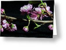 Flowering Almond 2011-16 Greeting Card