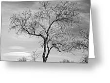 Trees Are Talking To Us Greeting Card