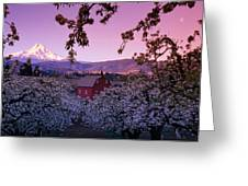 Flowering Apple Trees, Distant Barn Greeting Card