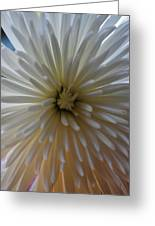 Flowering Burst Greeting Card