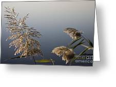 Flowering Cane Plant Greeting Card
