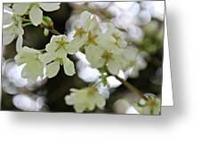 Flowering Cherry Tree 17 Greeting Card