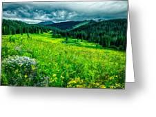 Flowering Colorado Mountain Meadow Greeting Card