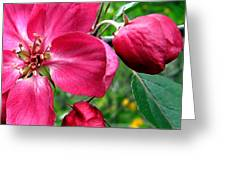 Flowering Crab Apple Greeting Card
