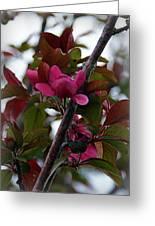 Flowering Crabapple Greeting Card