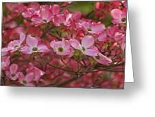Flowering Dogwood Flowers 01 Greeting Card