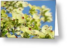 Flowering Dogwood Tree Art Print White Dogwood Flowers Blue Sky Art Greeting Card