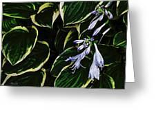 Flowering Hosta Greeting Card