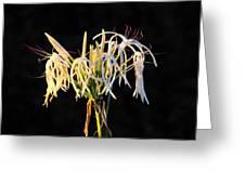 Flowering In Florida Greeting Card