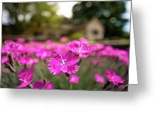 Flowering In The Front Greeting Card