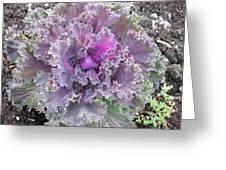 Flowering Kale Greeting Card