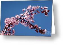 Flowering Of The Plum Tree 4 Greeting Card