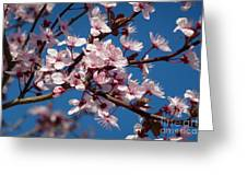 Flowering Of The Plum Tree 5 Greeting Card