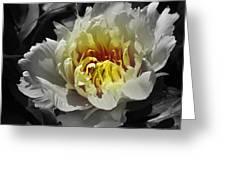 Flowering Peony In The Night Garden Greeting Card