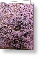 Flowering Pink In Spring Greeting Card
