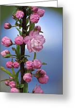 Flowering Pink On Blue Greeting Card