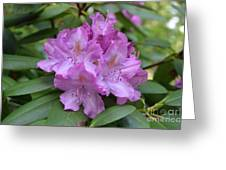 Flowering Pink Rhododendron Blossoms On A Bush Greeting Card