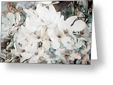 Flowering Star Magnolia Greeting Card