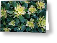 Flowering Succulent Plant Greeting Card