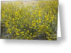 Flowering Tarweed Greeting Card