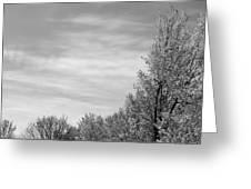 Flowering Trees Greeting Card