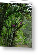 Flowering Trees Near The Path Greeting Card