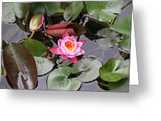 Flowering Water Lily Greeting Card