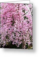 Flowering Willow Greeting Card