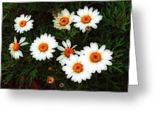 Flowering Yew Greeting Card