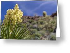 Flowering Yucca Greeting Card