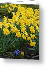 Flowers 146 Greeting Card