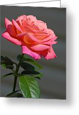 Flowers 186 Greeting Card