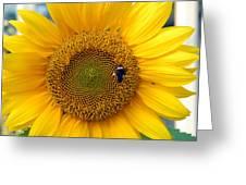 Flowers 188 Greeting Card