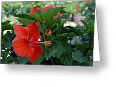Flowers 221 Greeting Card