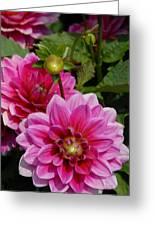 Flowers 225 Greeting Card