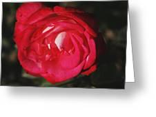 Flowers 4 Greeting Card