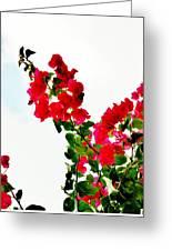Flowers 5 Greeting Card