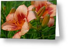 Flowers 56 Greeting Card
