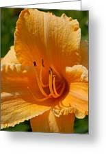 Flowers 59 Greeting Card