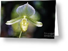 Flowers 61 Greeting Card
