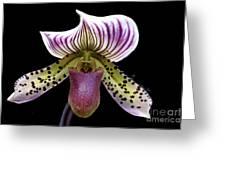 Flowers 63 Greeting Card