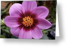 Flowers 65 Greeting Card