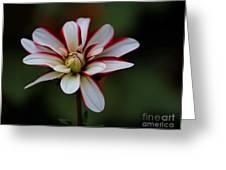 Flowers 66 Greeting Card