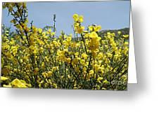Flowers 7 Greeting Card