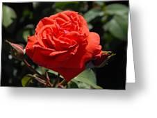 Flowers 702 Greeting Card